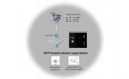 ATP-driven separation of liquid phase condensates in bacteria