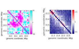 Transcription and chromosome observation in single cells with Hi-M